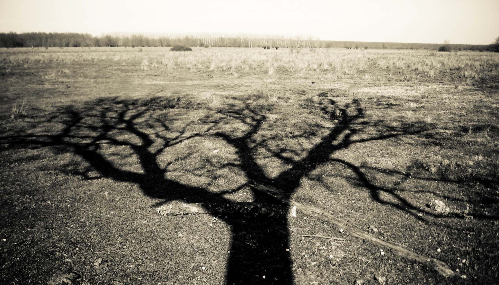 Shadow IT spreads across your workplace like the shadow of this tree does over the ground. Is it sunset for the IT profession as we traditionally know it?