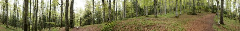 Upgrading Active Directory forests